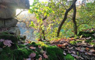 6 Querceto Trail - Castellaccio